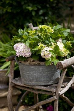 Wiaderko na kwiaty